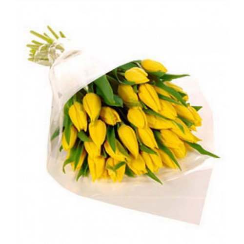 фото 25 желтых тюльпанов