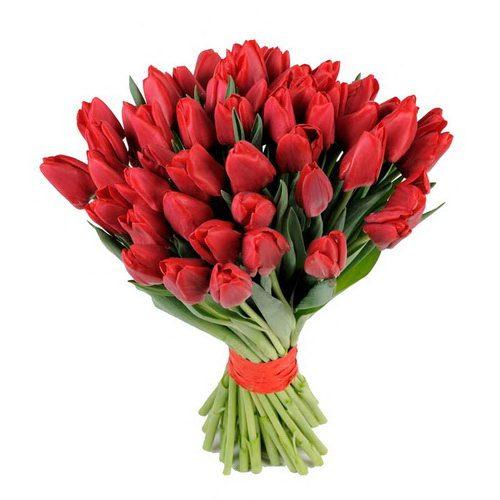 фото 49 красных тюльпанов
