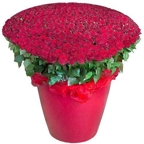 букет 301 красная роза в большом вазоне