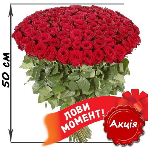 акційний букет 101 червона троянда (50см)