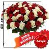 акційний букет 101 троянда мікс червона і біла (50 см)
