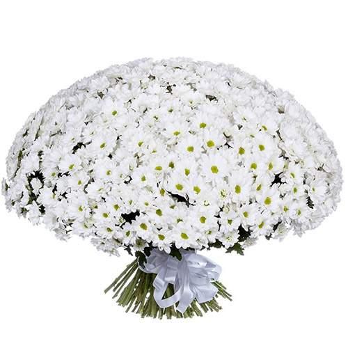 фото 101 ромашкова хризантема