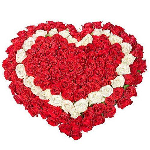 101 роза сердцем - красная, белая, красная фото