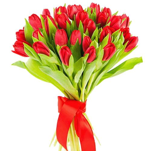 букет 25 красных тюльпанов фото