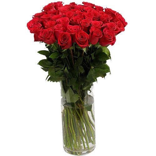 Троянда імпортна червона фото