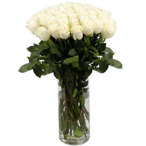 Троянда імпортна біла (поштучно) фото