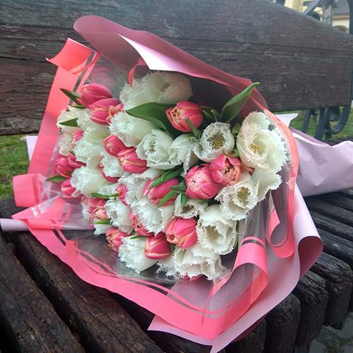 фото букета 51 бело-розовый тюльпан